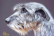 Dog Drawings Framed Prints - Irish Wolfhound  2 Framed Print by Elena Kolotusha