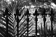 Tree Ferns Digital Art - Iron Fence by Rob Hans