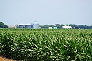 Corn Photos - Irrigated Corn by Monica Wheelus
