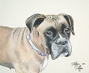 Boxer Pastels Framed Prints - Is pink really my color... Framed Print by Stephen Duffin