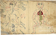 Persian Illustration Prints - Islamic Anatomical Drawings, 17th Print by Science Source