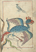 Allah Photos - Islamic Mythical Bird, Simurgh, 17th by Science Source