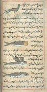 Flying Things Posters - Islamic Mythical Creatures, 17th Century Poster by Photo Researchers