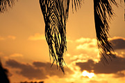 Islamorada Photos - Islamorada Sunset by Ty Helbach