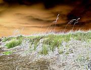 Island Dune Print by Peter  McIntosh