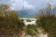 Beach Scenes Photo Originals - Island Trail out to the Beach by Barbara Bowen