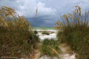 Barbara Bowen - Island Trail out to the Beach