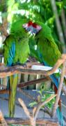 Parrots Photos - Isnt Love Grand by Sheryl Unwin