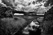 Florida Marsh Framed Prints - Isolated Shower - BW Framed Print by Christopher Holmes