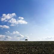 Agricultural Photos - Isolated tree by Bernard Jaubert