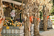 Isoms Orchard In Fall Regalia Print by Kathy Clark