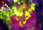 Grapes Digital Art Prints - Istrian Grapes-Rovinj Print by John Galbo