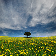 Field. Cloud Posters - It  Dandelion World Poster by Carlos Gotay