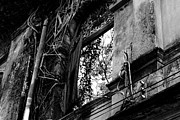 Haunted House Photo Prints - It Grows Print by Dean Harte