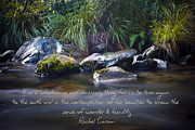 Rachel Carson Framed Prints - It is a Wholesome....... Framed Print by Karen Lewis