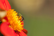 Bees Photos - It is all about the Buzz by Reflective Moments  Photography and Digital Art Images