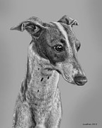 Akc Framed Prints - Italian Grayhound 2 Framed Print by Larry Linton