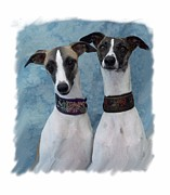 Greyhound Prints Digital Art - Italian Greyhound 446 by Larry Matthews