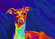 Puppy Digital Art Framed Prints - Italian Greyhound  Framed Print by Jane Schnetlage