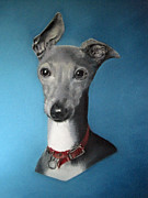 Greyhound Prints - Italian Greyhound on blue Print by Juliet Matthews