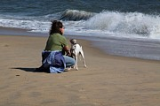 Greyhound Photos - Italian Greyhound on the Beach by Jim Vansant