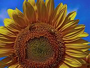 Gifts Originals - Italian Sunflower with Bees by Jon Cretarolo
