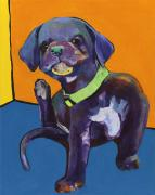 Black Lab Puppy Paintings - Itchy by Pat Saunders-White