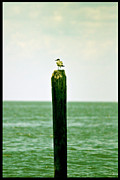 Sea Bird Photos - Its a Big World by Scott Pellegrin