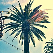 Picoftheday Posters - Its A Palm Tree. #la #losangelas Poster by Johnathan Dahl