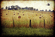 Hay Bales Digital Art Posters - Its Baling Time Poster by Margaret Hormann Bfa