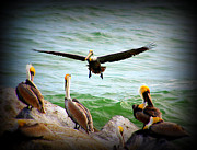 Pelican Landing Prints - Its My Space Print by Susanne Van Hulst