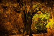 The Park Photo Posters - Its not the Angel Oak Poster by Susanne Van Hulst