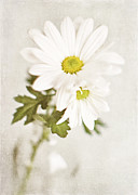 Shabby Chic Flowers Prints - Its Only Love Print by Lisa Russo