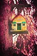 Bird House Prints - Its open Print by Angela Doelling AD DESIGN Photo and PhotoArt