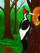 Ivory-billed Woodpecker Posters - Ivory-Billed Woodpecker Poster by L J Oakes