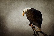 American Bald Eagle Prints - Ivory Towers Print by Reflective Moments  Photography and Digital Art Images