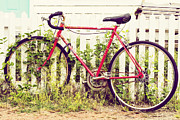 Ivy Bike Print by Laura George