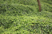 Chinese Landscape Posters - Ivy-Covered Hill Poster by Carol Groenen