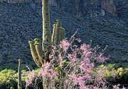 Jacarandas And Saguaros Print by Nathan Mccreery