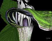 Digital Collage Prints - Jack and the Pulpit Print by Torie Tiffany