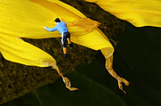 Just For Fun Posters - Jack Climbs A Sunflower Poster by Bob Christopher