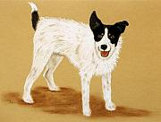 White Dogs Pastels Framed Prints - Jack Russell 2 Framed Print by Jan Amiss