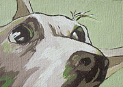 Dog Paintings - Jack Russells Never Stay Still by Sandy Tracey