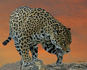 Wildlife Sunset Posters - Jaguar At Sunset Poster by Larry Linton