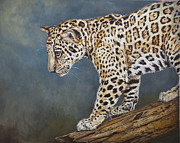 Blue Acrylic Prints - Jaguar Cub by Enzie Shahmiri