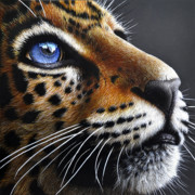 Jaguar Paintings - Jaguar Cub by Jurek Zamoyski