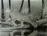 Wildlife Landscape Drawings - Jaguar in the Rainforest by Reppard Powers