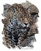 South American Photos - Jaguar by Larry Linton