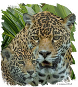Jaguar Digital Art - Jaguar Mother And Cub by Larry Linton