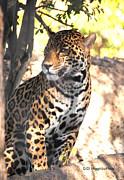 Jaguar Poise Print by DiDi Higginbotham